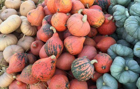 It's Pumpkin Regatta Time